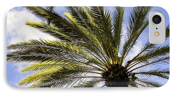 Canary Island Date Palm IPhone Case by Zina Stromberg