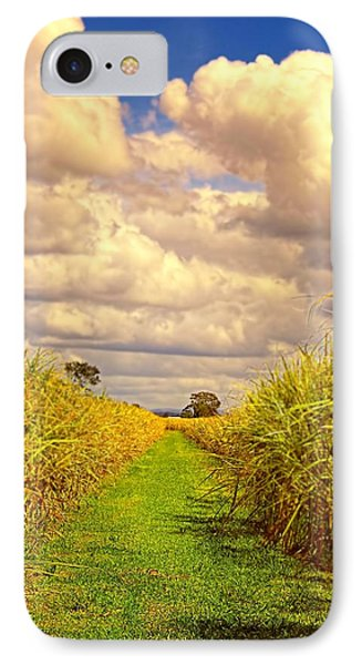 IPhone Case featuring the photograph Cane Fields by Wallaroo Images