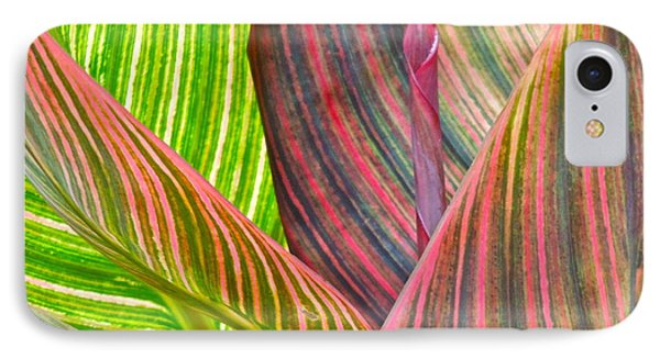 IPhone Case featuring the photograph Canna Tropicana Color by Eve Spring