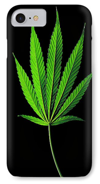 Cannabis Sativa Indica Leaf IPhone Case by Gilles Mermet