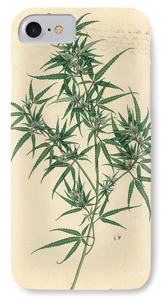 Cannabis Sativa IPhone Case by Natural History Museum, London