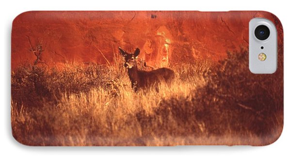 Canyonland Mule Deer Phone Case by T C Brown