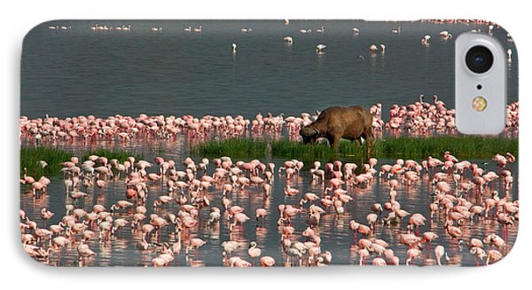 Cape Buffalo And Lesser Flamingos IPhone Case by Panoramic Images