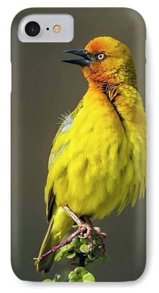 Cape Weaver IPhone Case by Peter Chadwick