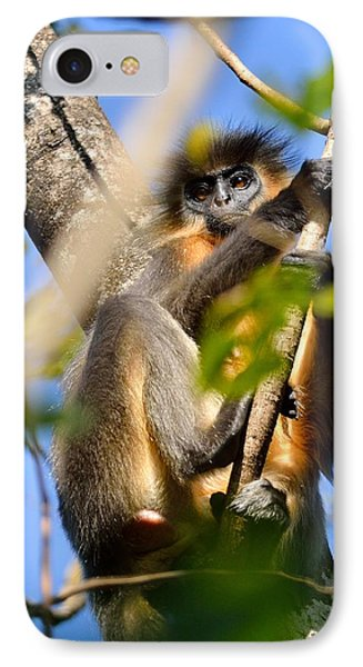 Capped Langur Phone Case by Fotosas Photography