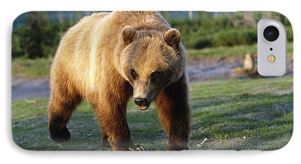 Captive Brown Bear Walking IPhone Case by Doug Lindstrand