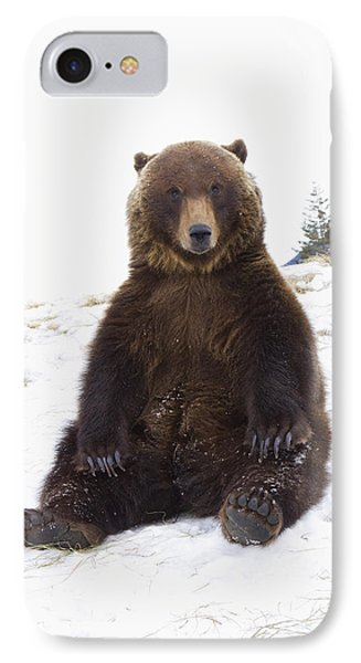 Captive Grizzly During Winter Sits IPhone Case by Doug Lindstrand