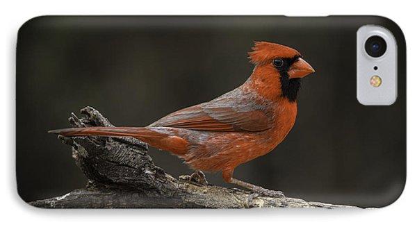 Cardinal 2011-1 IPhone Case