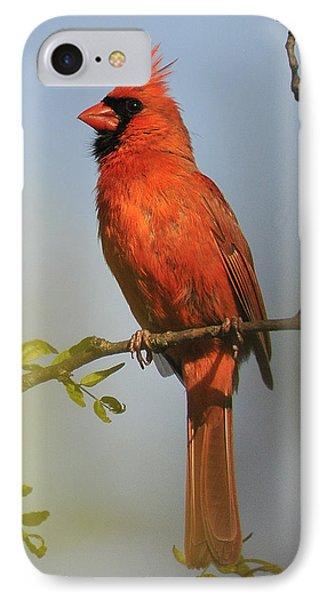Cardinal 329 IPhone Case