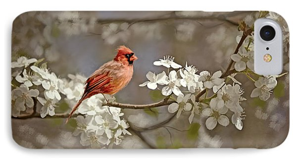 Cardinal And Blossoms IPhone Case by Bonnie Willis