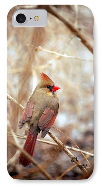IPhone Case featuring the photograph Cardinal Birds Female by Peggy Franz