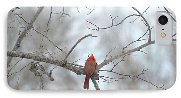 IPhone Case featuring the photograph Cardinal Delight by Dacia Doroff