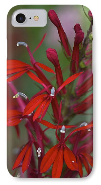 Cardinal Flower IPhone Case by Jane Eleanor Nicholas
