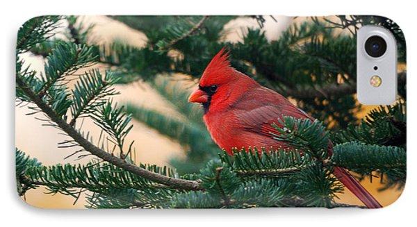 Cardinal In Balsam IPhone Case