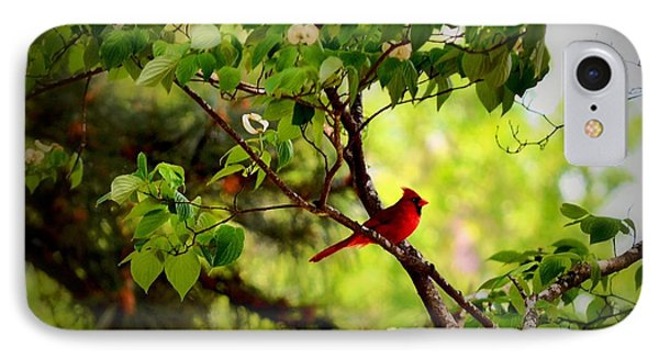 Cardinal In Dogwood IPhone Case by Tara Potts