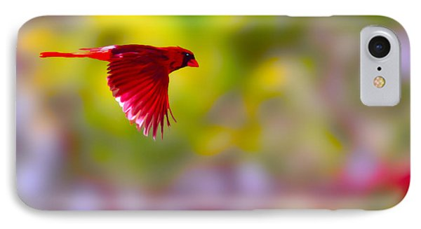 Cardinal In Flight Phone Case by Dan Friend