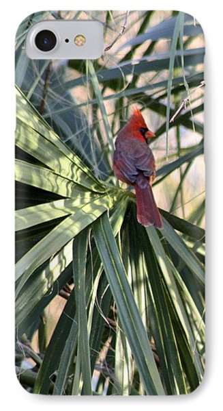Cardinal In Palmetto Tree IPhone Case by Jeanne Kay Juhos