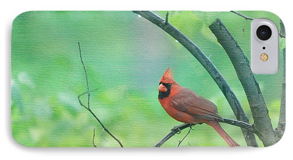 Cardinal In Rain IPhone Case