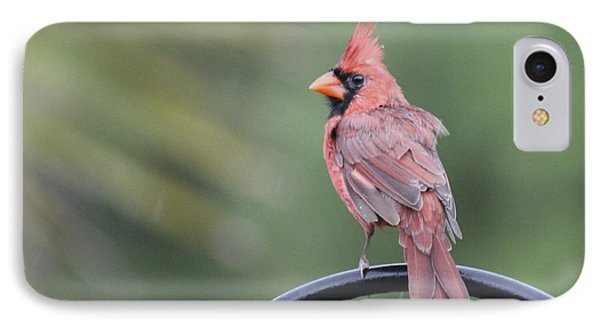 Cardinal In The Rain IPhone Case by Jeanne Kay Juhos