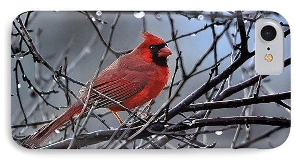 Cardinal In The Rain   IPhone Case