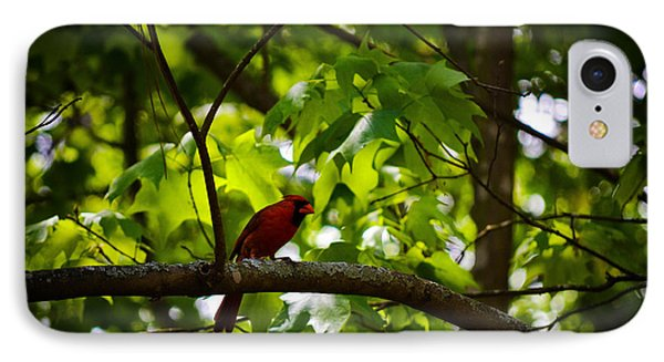 Cardinal In The Trees IPhone Case by Tara Potts