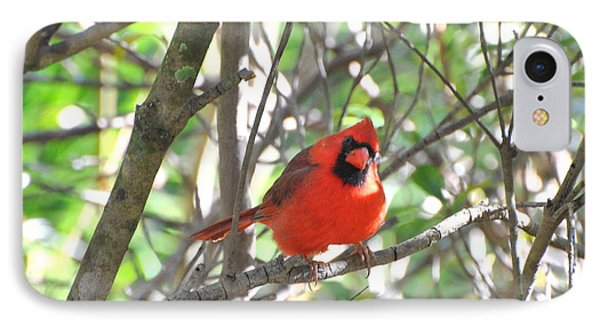 IPhone Case featuring the photograph Cardinal In Tree by Jodi Terracina