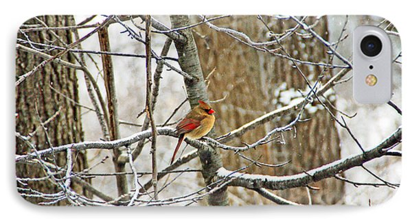 Cardinal In Winter Phone Case by Aimee L Maher Photography and Art Visit ALMGallerydotcom