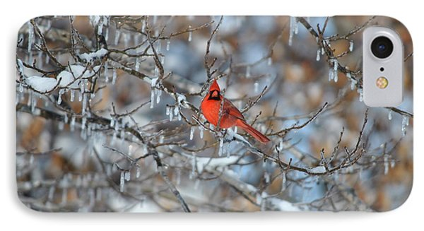 Cardinal In Winter Phone Case by Cim Paddock