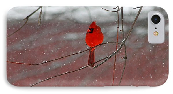 IPhone Case featuring the photograph Cardinal In Winter by Olivia Hardwicke