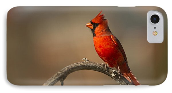 IPhone Case featuring the photograph Cardinal by Jerry Gammon