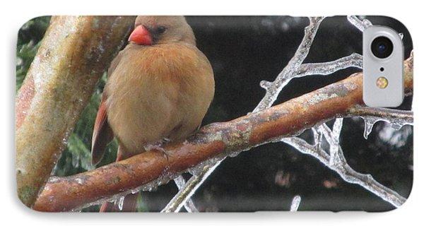 Cardinal IPhone Case by Marilyn Zalatan