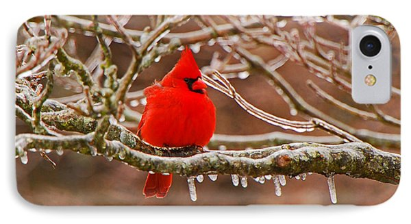 Cardinal IPhone Case by Mary Carol Story