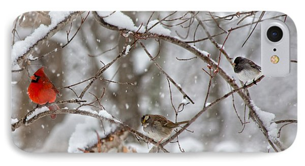 Cardinal Meeting In The Snow IPhone Case