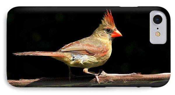 Cardinal On Black IPhone Case