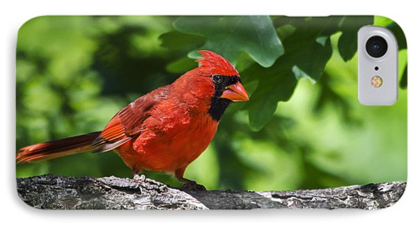 Cardinal Red Phone Case by Christina Rollo
