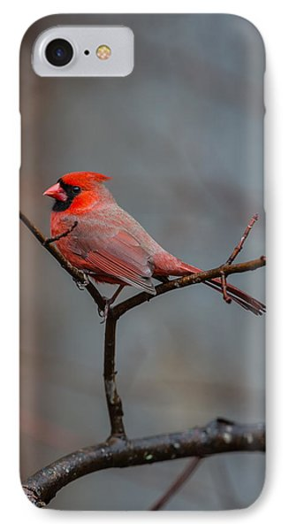 Cardinal Sing IPhone Case