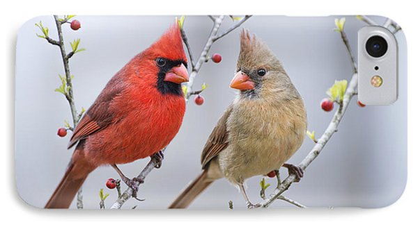 Cardinals In Early Spring IPhone Case