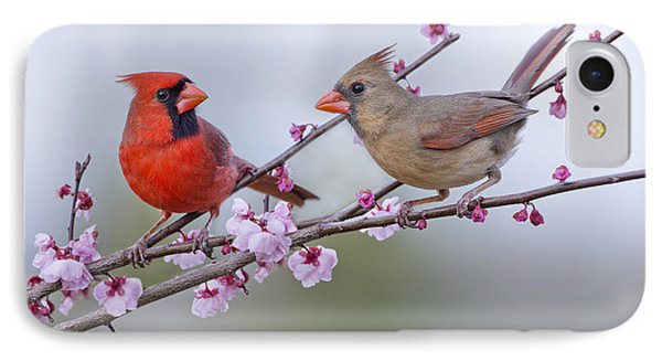 Cardinals In Plum Blossoms IPhone Case