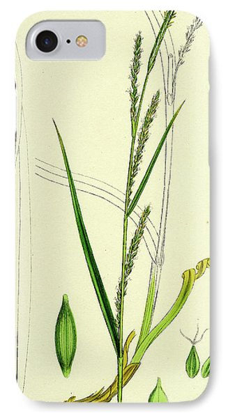 Carex Strigosa Loose-spiked Wood Sedge IPhone Case by English School
