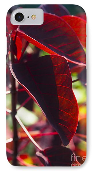 Caribbean Copper Plant IPhone Case by Sharon Mau