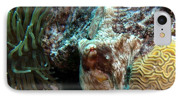 Caribbean Reef Octopus Next To Green Anemone IPhone Case by Amy McDaniel