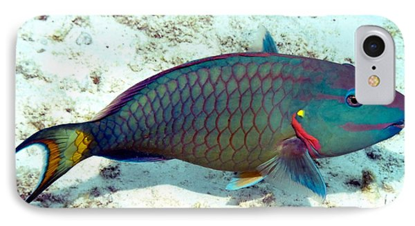 IPhone Case featuring the photograph Caribbean Stoplight Parrot Fish In Rainbow Colors by Amy McDaniel