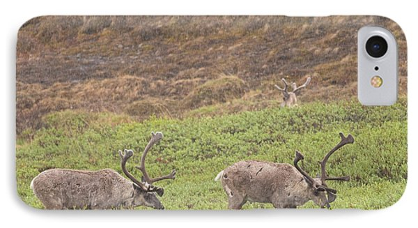 Caribou In The Rain IPhone Case by Brian Magnier
