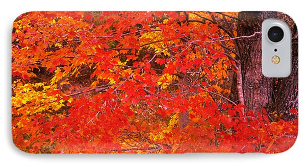 IPhone Case featuring the photograph Carolina Autumn by Marion Johnson