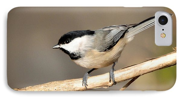IPhone Case featuring the photograph Carolina Chickadee  by Kerri Farley