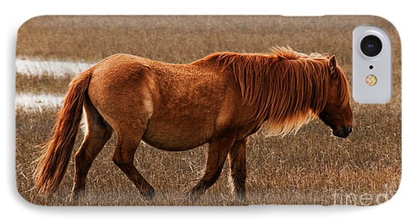 Carrot Island Pony IPhone Case by Sharon Seaward