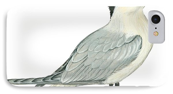Caspian Tern IPhone Case by Anonymous