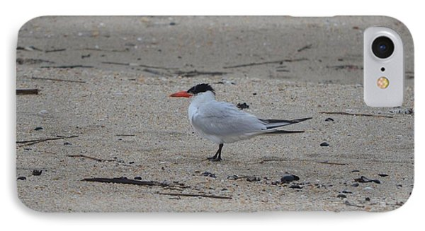 IPhone Case featuring the photograph Caspian Tern by James Petersen