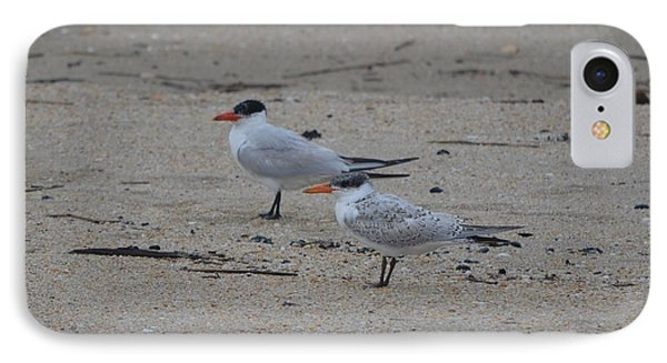 IPhone Case featuring the photograph Caspian Tern Young And Adult by James Petersen