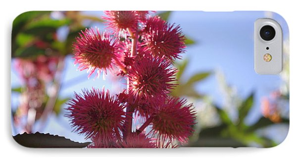 Castor Bean IPhone Case by David Rizzo